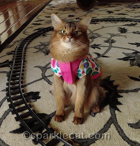 somali cat in birthday dress by toy train tracks