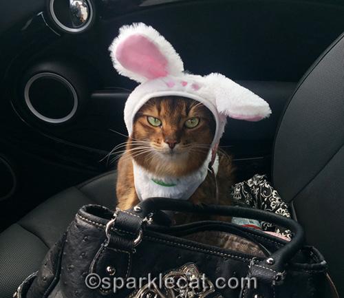 somali cat in easter bunny costume