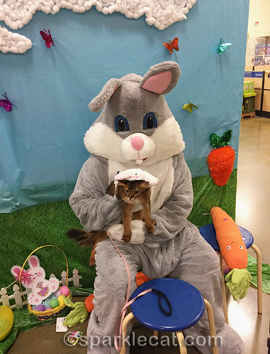 somali cat with Easter Bunny at PetSmart