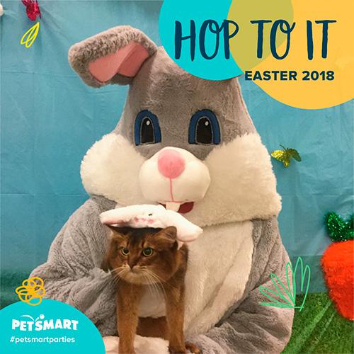 somali cat and Easter Bunny Petsmart photo