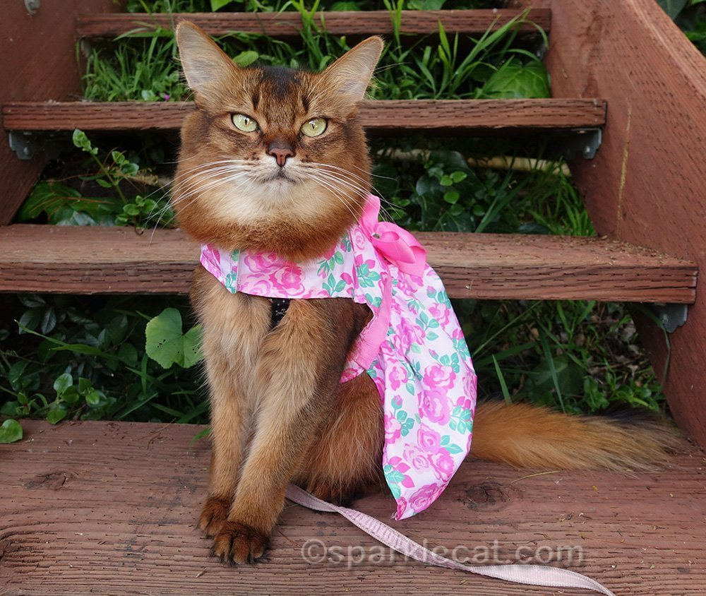 somali cat wearing spring flower dress