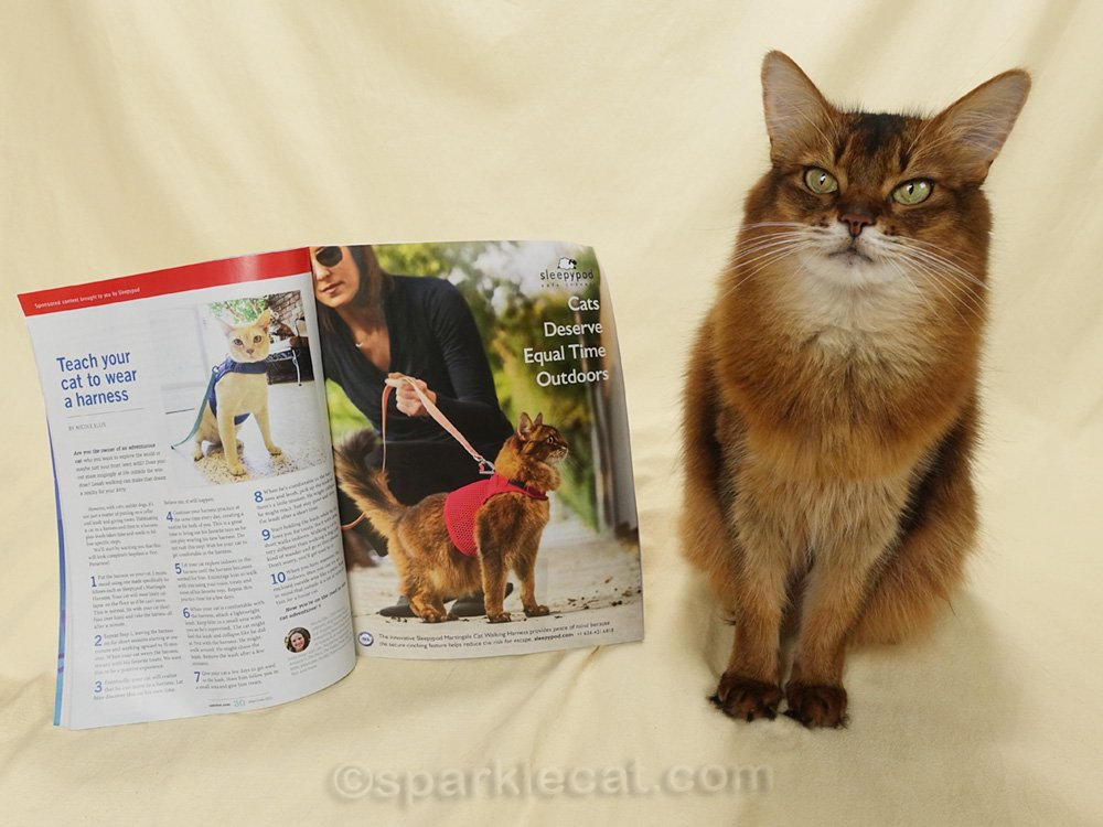 Somali cat posing with a Catster magazine ad featuring herself