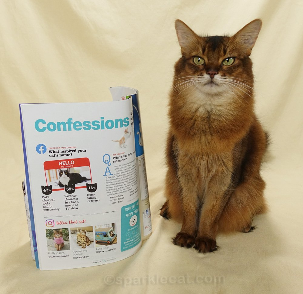 Somali cat posing with a page of Catster magazine featuring her Instagram profile