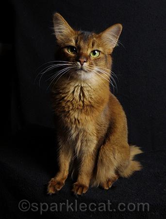 I've got my Kitty Power look on