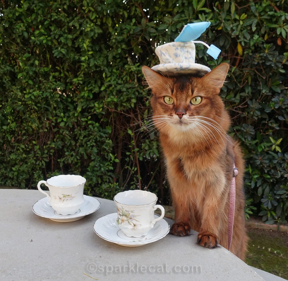 somali cat with tea service and tea cup hat