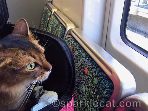 somali cat on the Los Angeles Metro Rail Gold Line