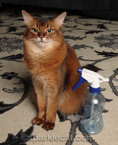 Why You Should Never Use a Squirt Bottle to Discipline Your Cat