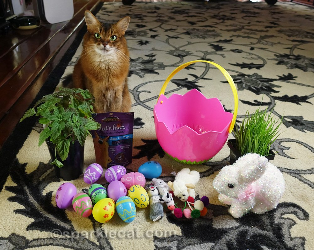 Summer shows how to make an Easter basket for your cat.