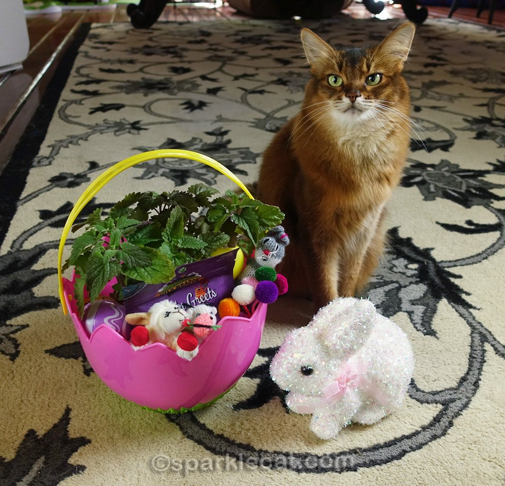 somali cat with completed cat Easter basket
