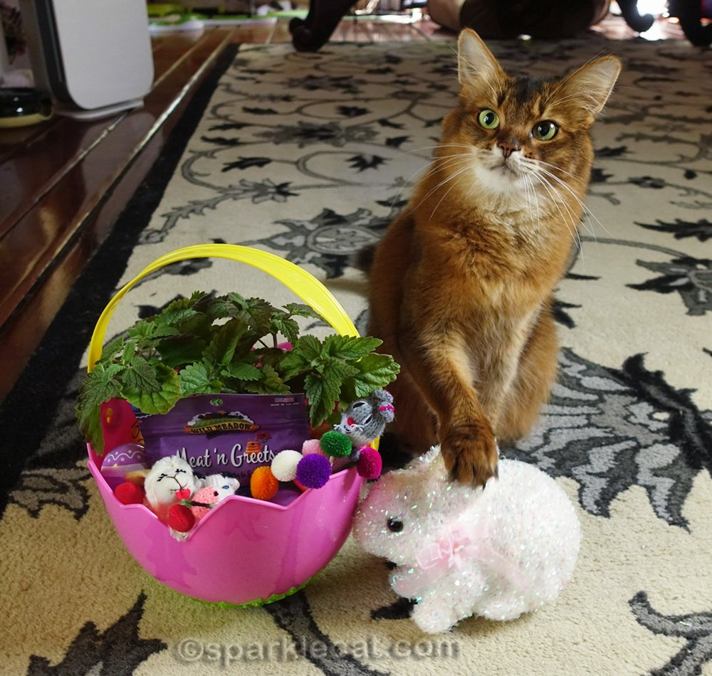 somali cat with cat easter basket and paw on the decorative bunny