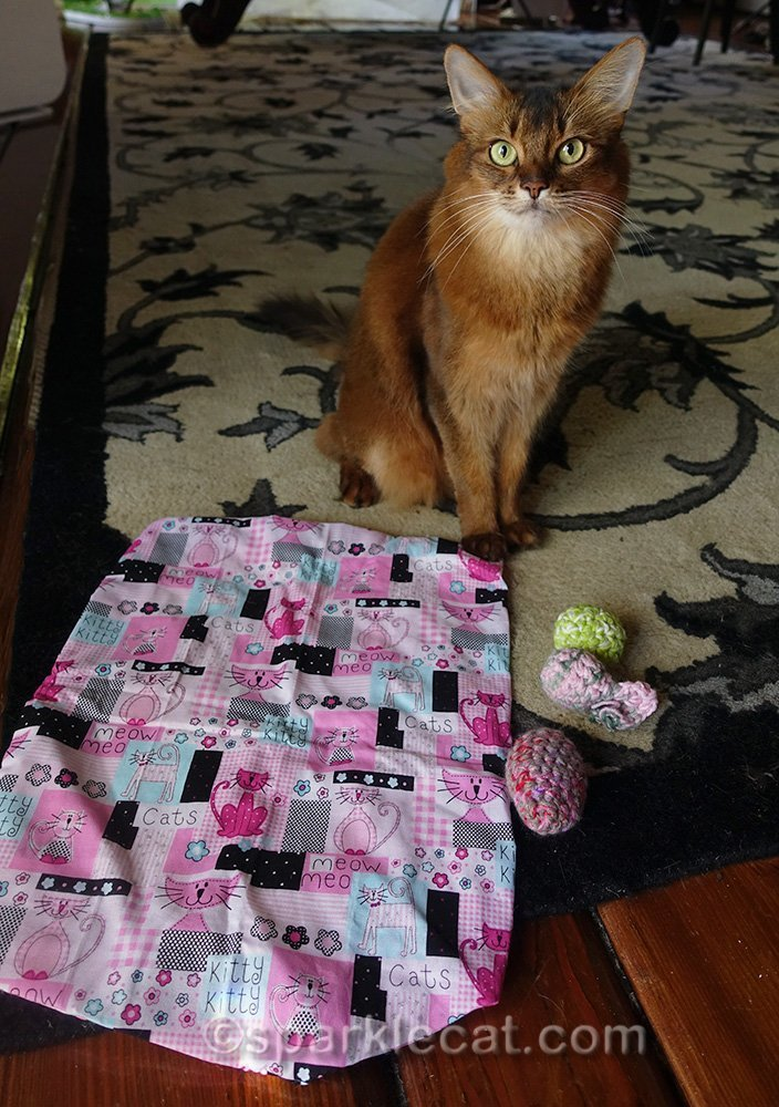 somali cat with gifts