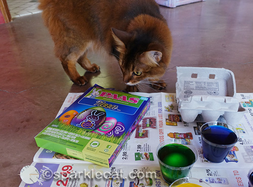 somali cat with Paas egg decorating kit