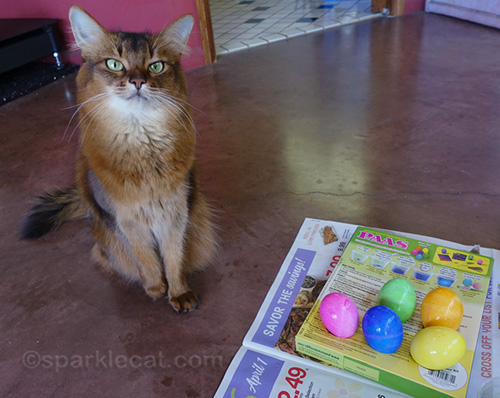 somali cat with dyed Easter eggs