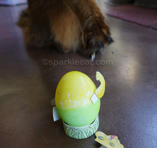 somali cat touches decorated egg, and it falls apart