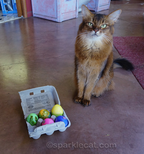 somali cat with badly decorated eggs