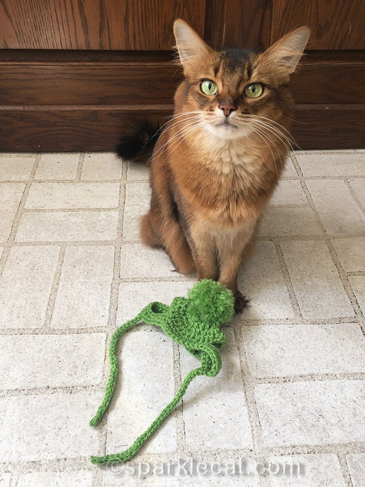 somali cat with knit hat made by therapy cat patient