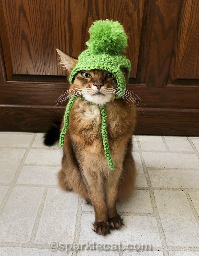 Somali cat with knit hat on crooked