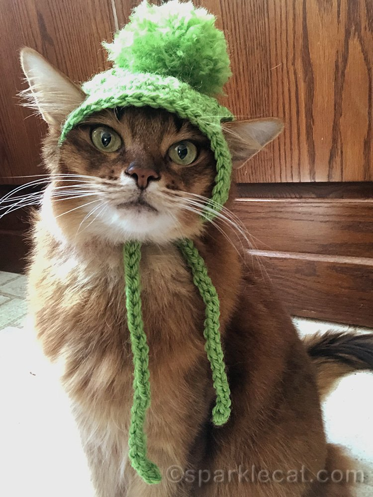 somali cat selfie with knit cap
