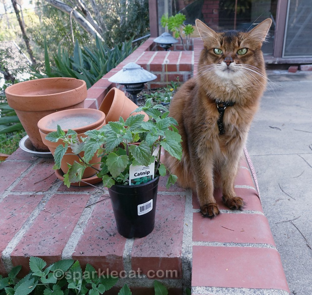 Summer helps plant her new catnip in the built-in planter outside.