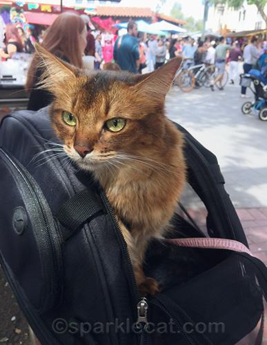 somali cat at El Pueblo de Los Angeles