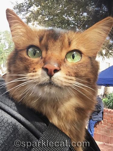 somali cat selfie at El Pueblo de Los Angeles