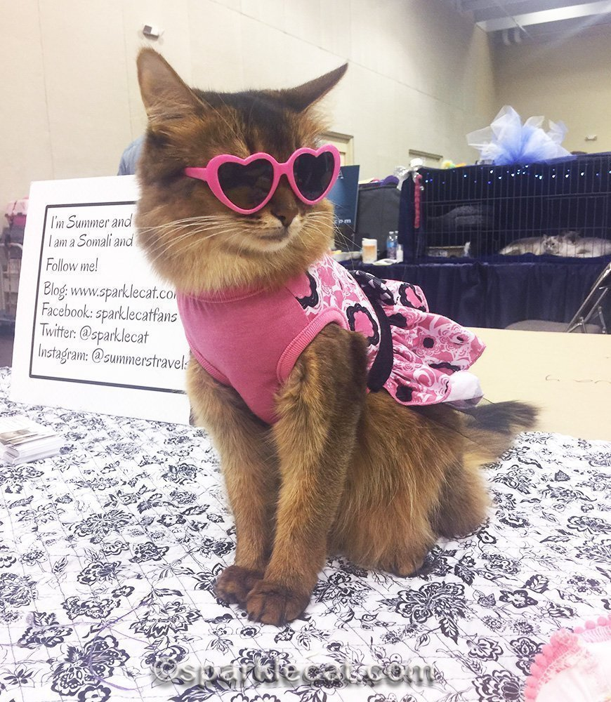 celeb-kitty at a cat show