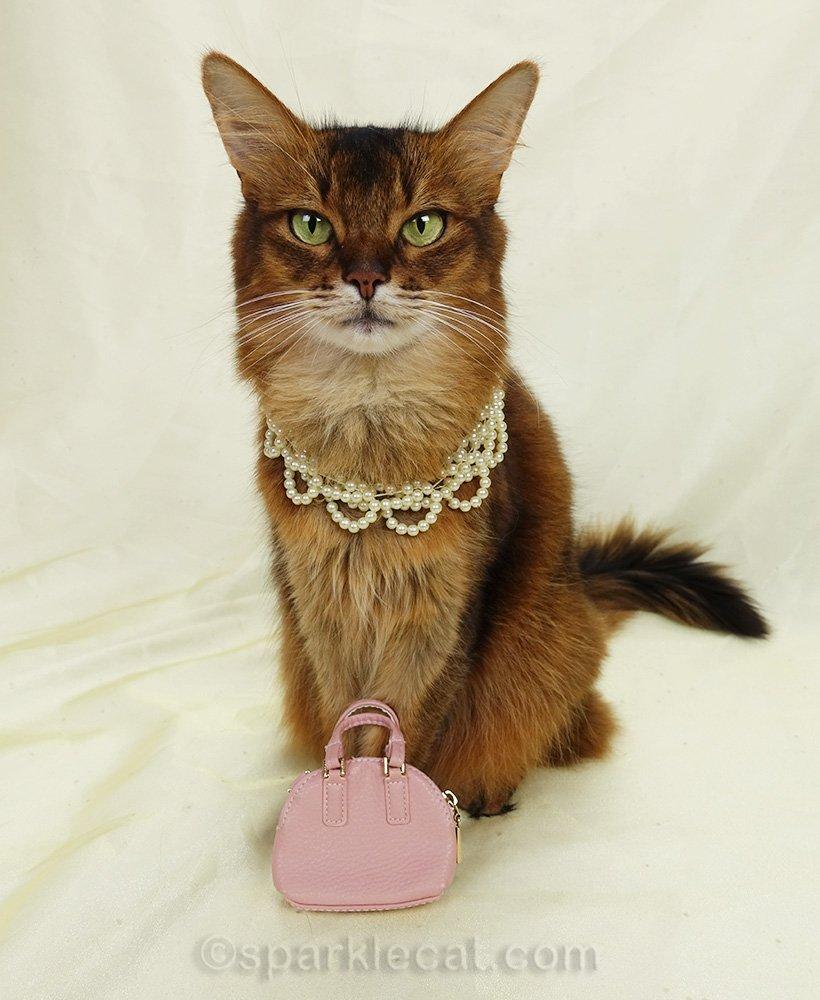 somali cat in pears with handbag