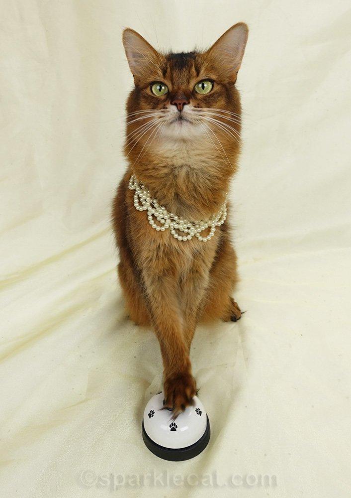 somali cat ringing for servants
