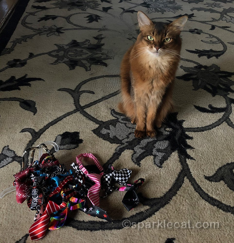 somali cat with a pile of neckties