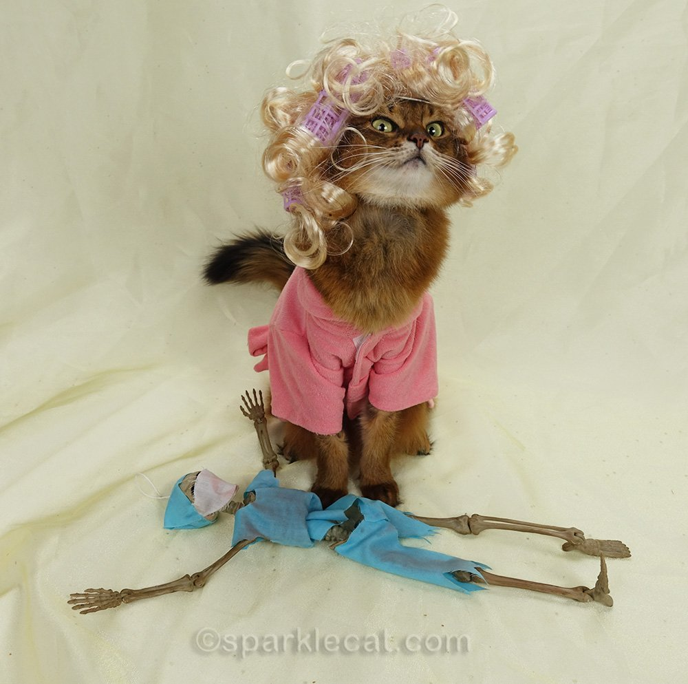 somali cat in housecoat and wig, shocked at finding dr. bones prostrate