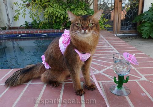 somali cat in pink bikini by jacuzzi