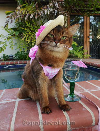 somali cat in bikini and straw hat by jacuzzi