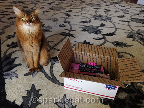 somali cat announcing birthday party prize pack winner