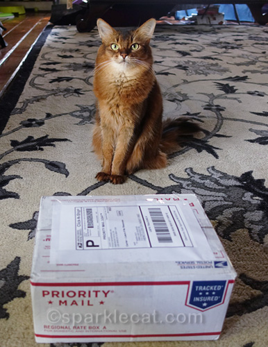 somali cat with package ready to be shipped