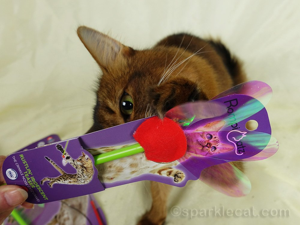 somali cat trying to open Rustlin Iridescent Teaser