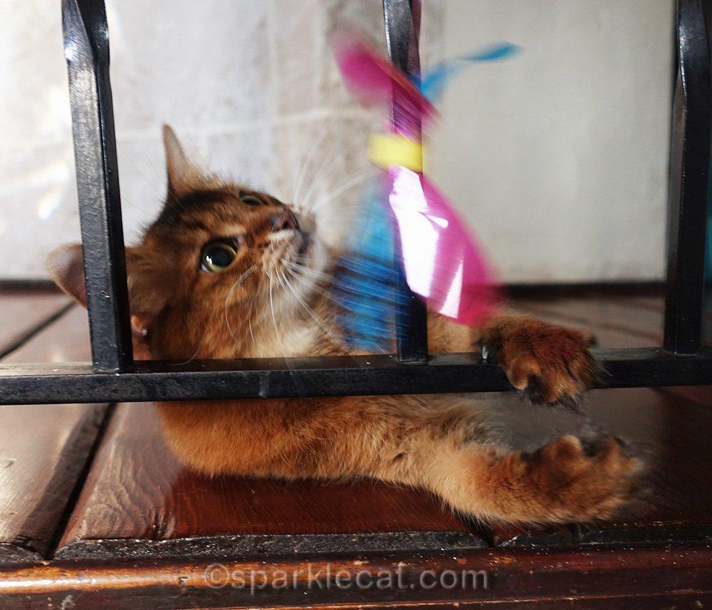 somali cat with Rustlin Winged Bug Teaser