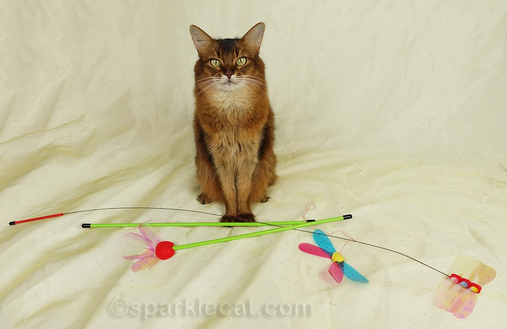 somali cat with RompiCatz toys for giveaway