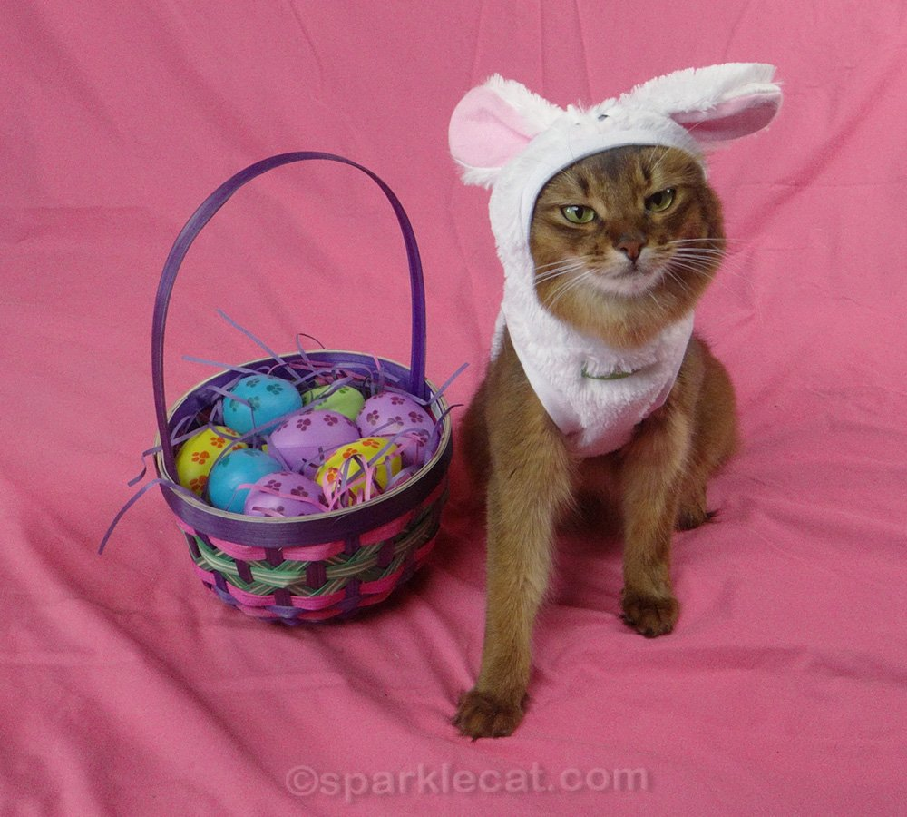 Summer shares some Easter outtake flashbacks on this Caturday.