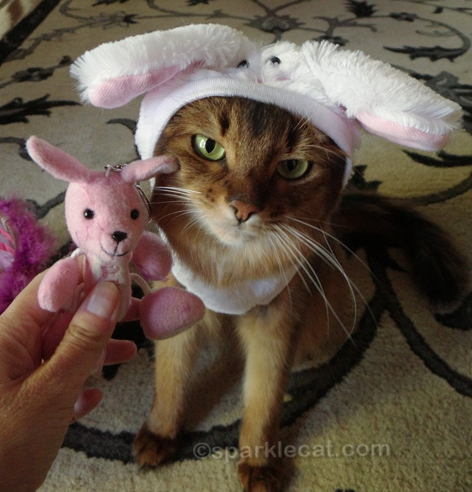 somali cat unhappy about posing with bunny Pez dispenser