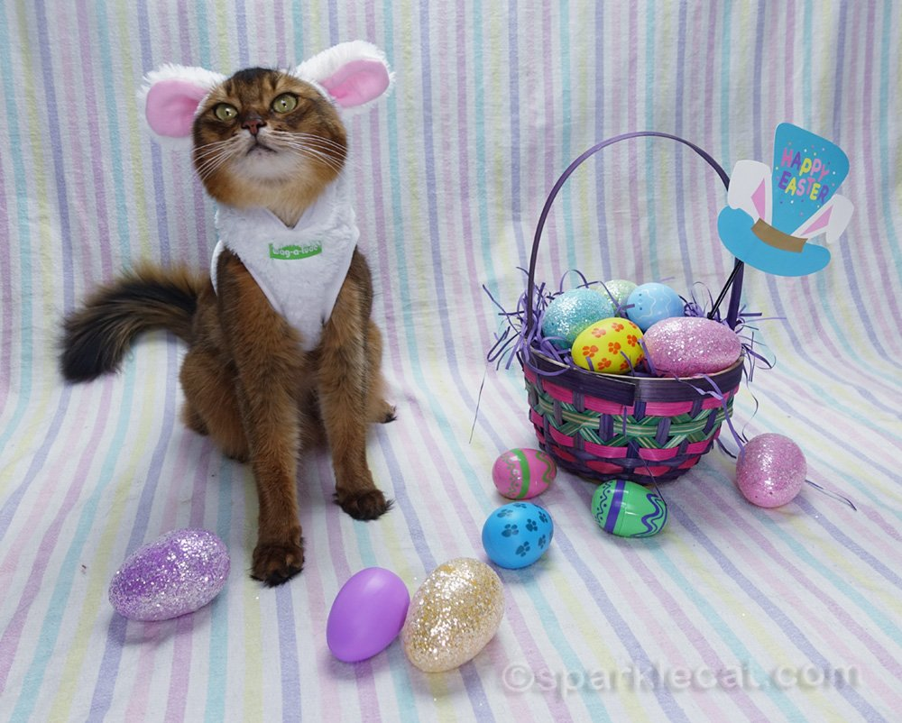 Somali cat with funny facial expression wearing a bunny suit and in an easter setting