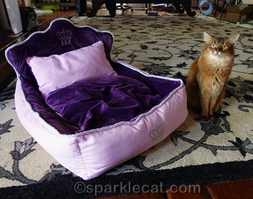 somali cat next to cat bed fit for a queen