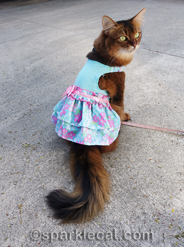 somali cat modeling turquoise spring dress