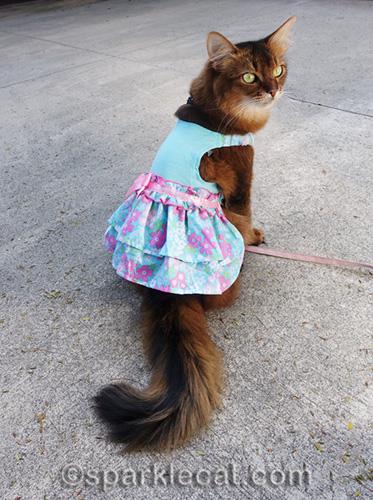 somali cat modeling turquoise spring dress