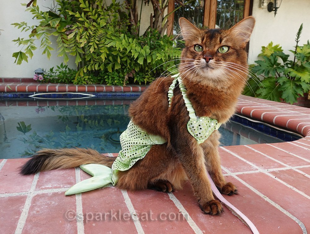 somali cat wearing mer-kitty costume