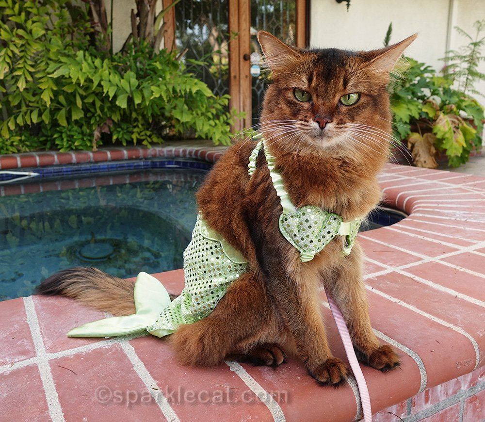 somali cat annoyed about wearing mer-kitty costume