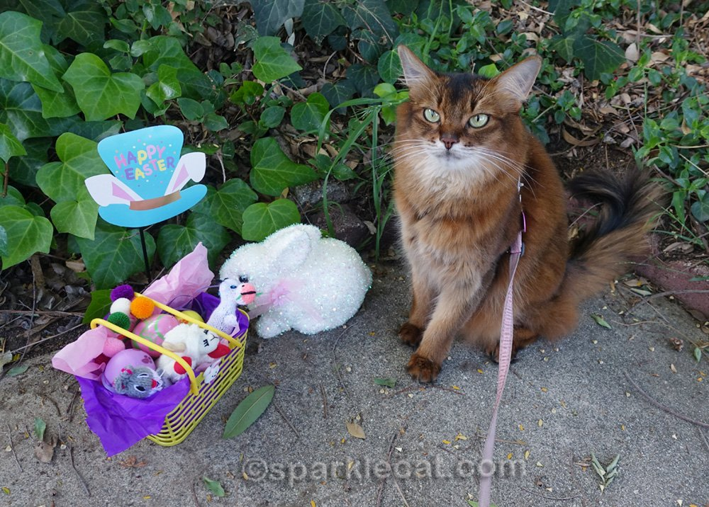 somali cat with easter basket and decor