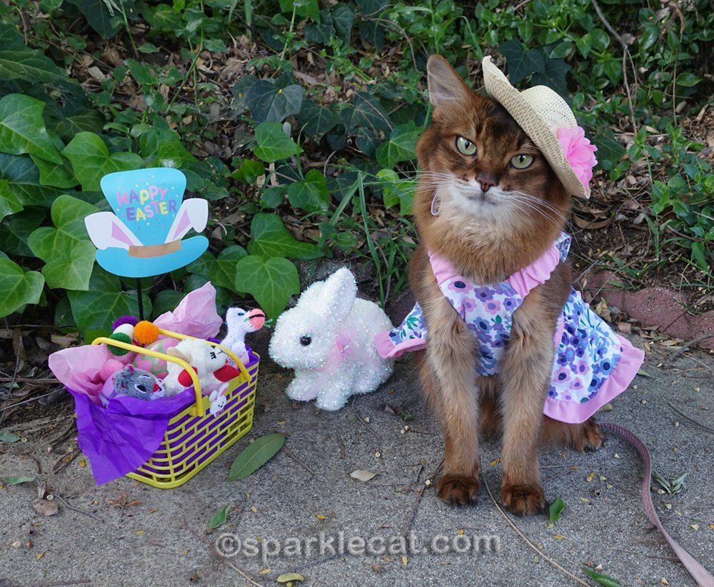 somali cat in spring dress and straw hat with Easter basket and decor