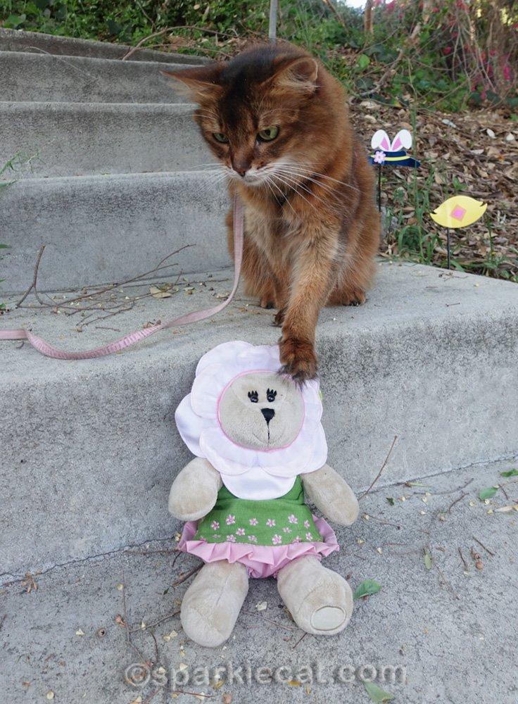 Somali cat touching bear stuffie