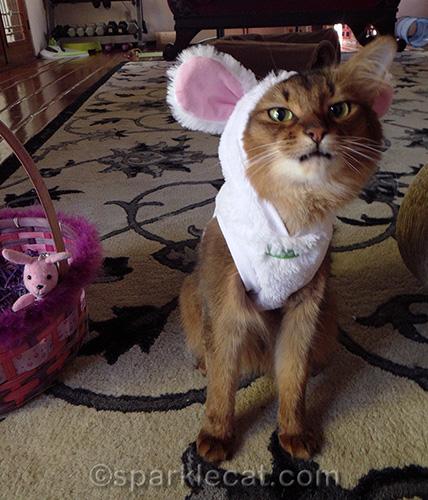 annoyed somali cat in bunny costume