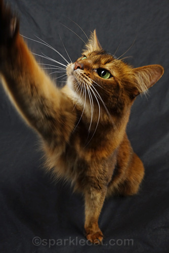 High Five to Save Cats' Lives With Cat Pawsitive